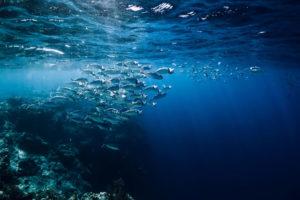 Az édesvízi halak fogyasztására buzdítanak